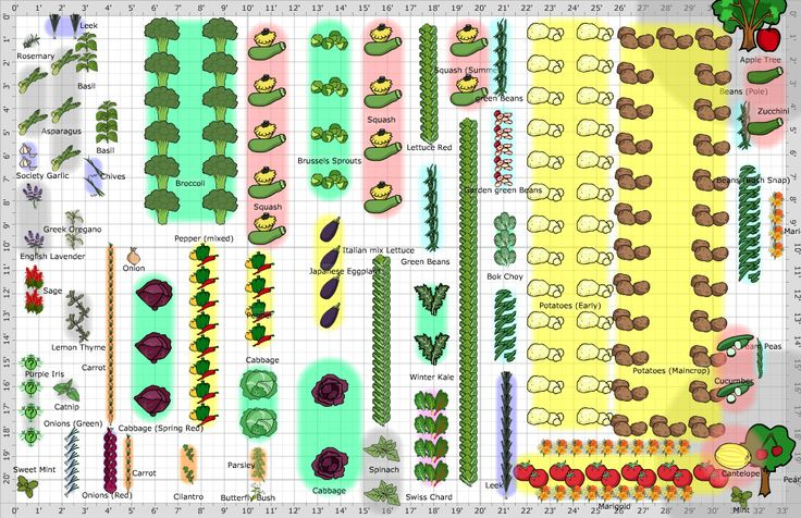 Large Vegetable Garden Layout | Garden layout vegetable ...