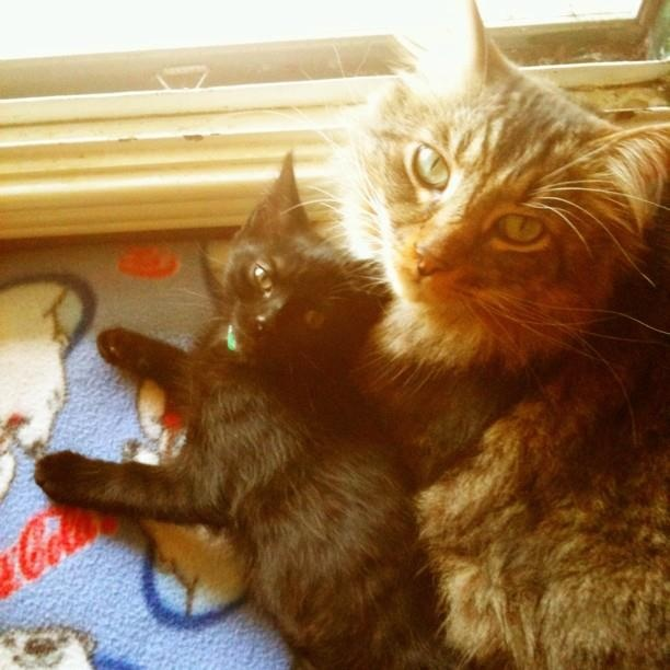 /Meet Miles and Lexi / This photo was taken within a couple days of Lexi's arrival home from the shelter. She took to her new big brother immediately.: Big Brother