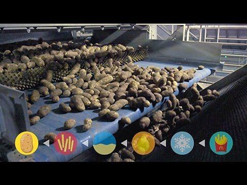 VIDEO: Ce contin cartofii prajiti de la McDonald's? Secretul a fost dezvaluit