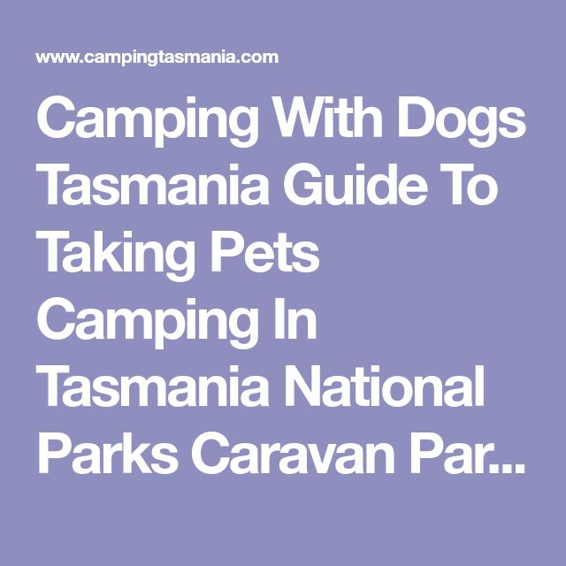 Camping With Dogs Tasmania Guide To Taking Pets Camping In Tasmania National Parks Caravan Parks Pet Friendly Campsites Reserves