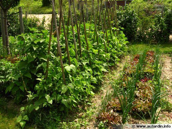 Les 127 Meilleures Images Propos De Fleurs Et Jardin Sur Pinterest Jardins Pi Ces D 39 Eau Et