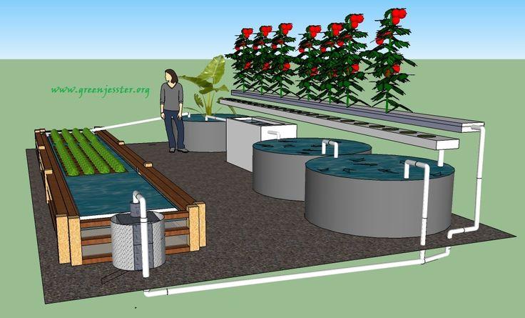 Chop aquaponics system recherche google aquaponie for Design a pond software