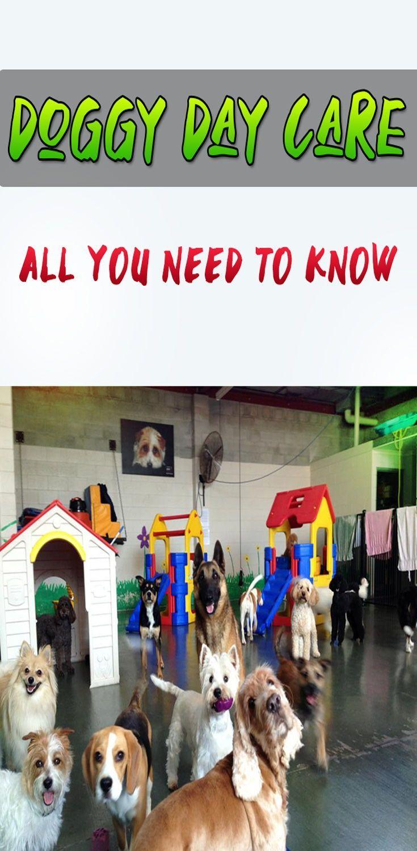 Dog Training Near Me Vs Online Dog Training Dog Daycare Dog