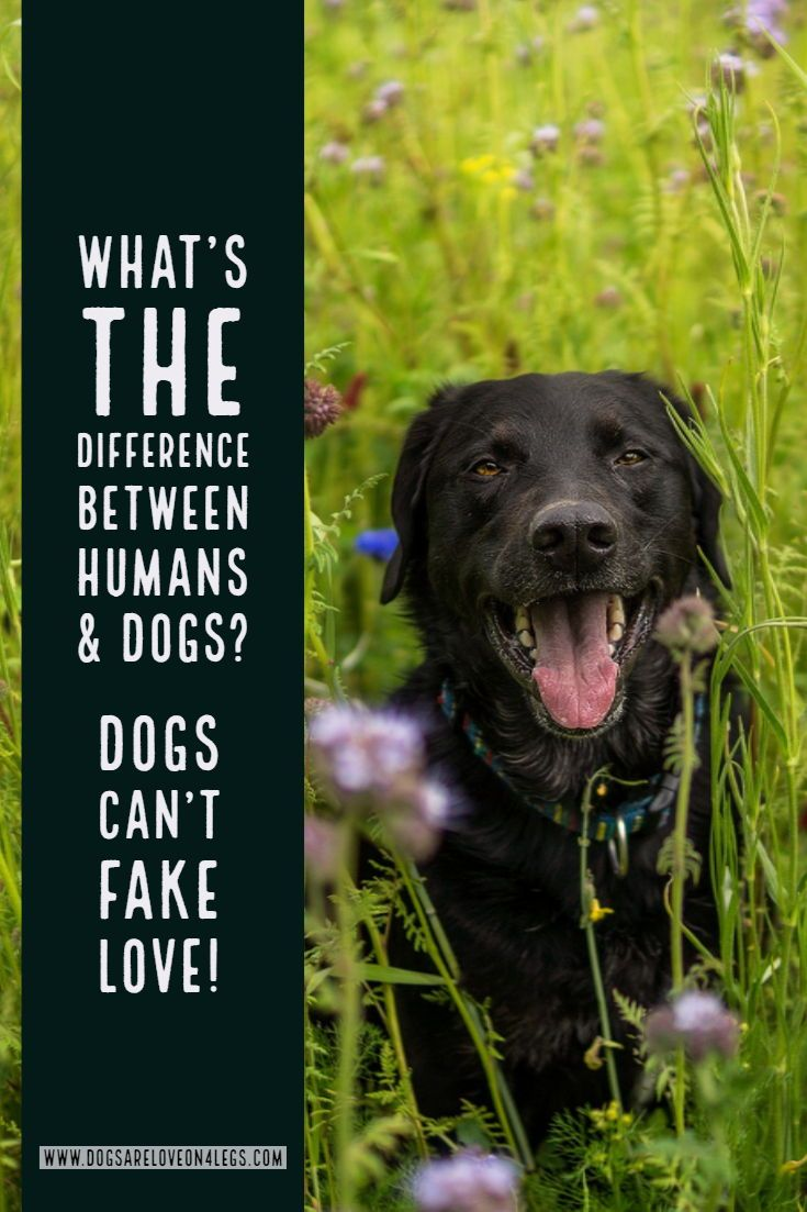 Dog Quote What S The Difference Between Humans Dogs Dog Dog Quotes Inspirational Quotes Dog Quotes Funny Best Dog Quotes Dog Quotes Inspirational