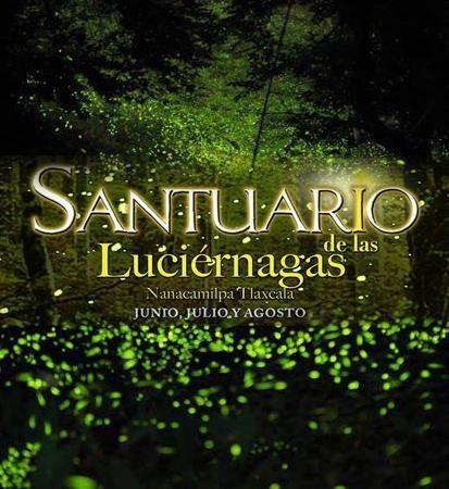 santuario de las luciernagas tlaxcala - Buscar con Google