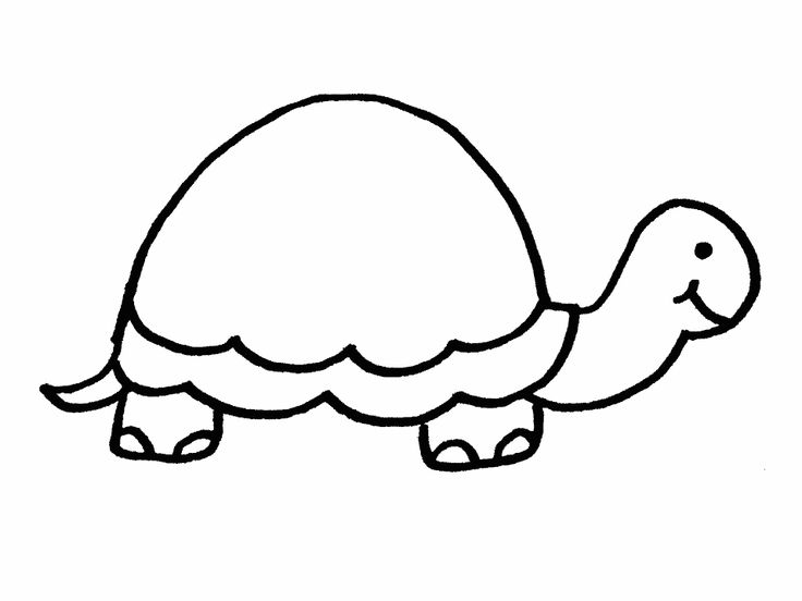 Best 25 Turtle Coloring Pages Ideas On Pinterest Kids Coloring Coloring Pages Turtle