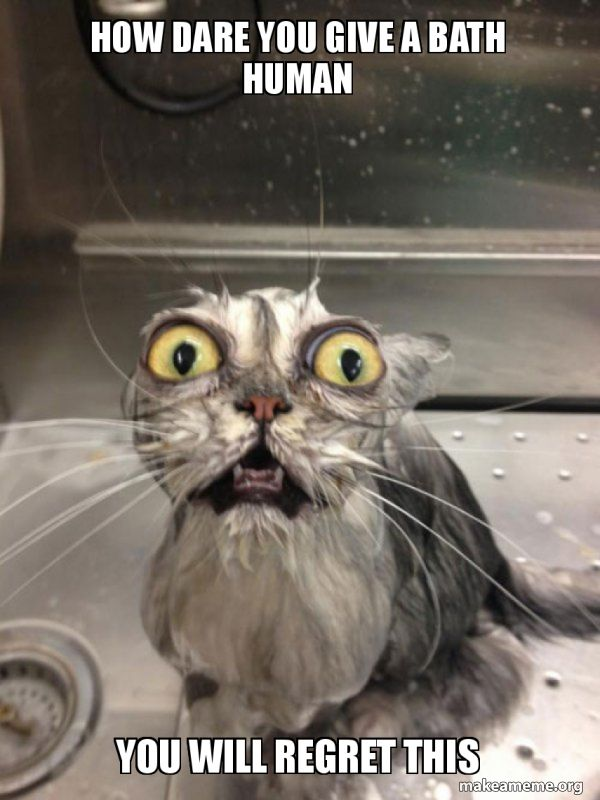 Funny Cat Meme Creepy Cat Kittens Funny Cat Bath