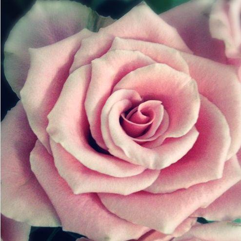 http://www.kathetrones.com/#!Et-skifte-til-mer-kjærlighet/c1uf8/564b60160cf292344da11bd9