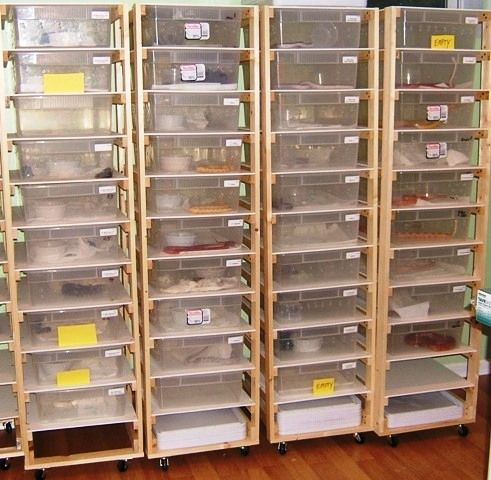 Build Your Own Snake Reptile Rack My Dream Of A Room For Cold