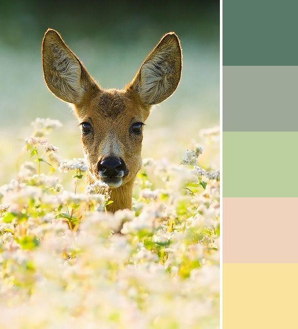Kleurpalet van de Week: Nature love