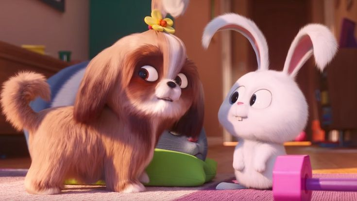 The Secret Life Of Pets 2 Daisy Voice Search Secret Life Of Pets Pets Movie Secret Life