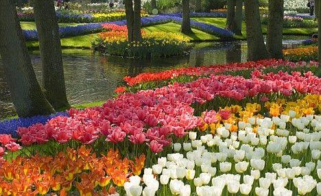 Dutch Tulip Fields: Tulip Fields, Canvas Prints, Tulip Gardens, Colors, Mark Bolton, Spring Tulip, Places, Photographers Prints, Travel Lists