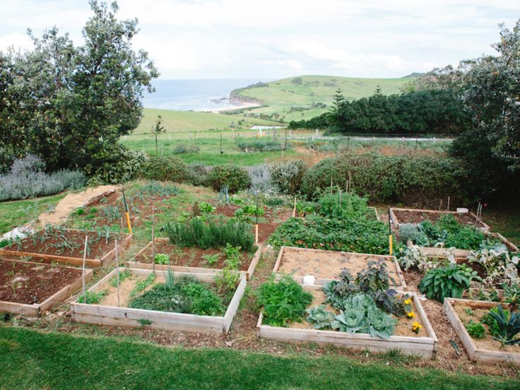The Slowpoke: INTERVIEW: BUENA VISTA FARM // Small-scale farming and food workshops on NSW's south coast. #gerringong #fromscratch #preserving #baking #cooking Photo: Luisa Brimble
