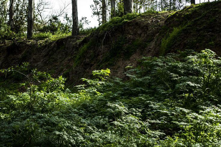 Cerro San Cristóbal, Santiago, Chile - Más en www.juanpaorrego.com