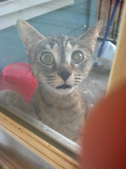 27 Surprised Cats Who Can't Believe What They Just Saw (PHOTOS)