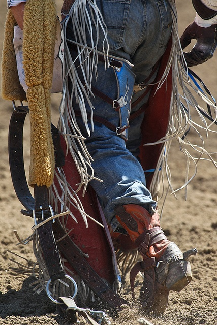 576 Curated Rodeo Rough Stock Ideas By Krabbitcarrier