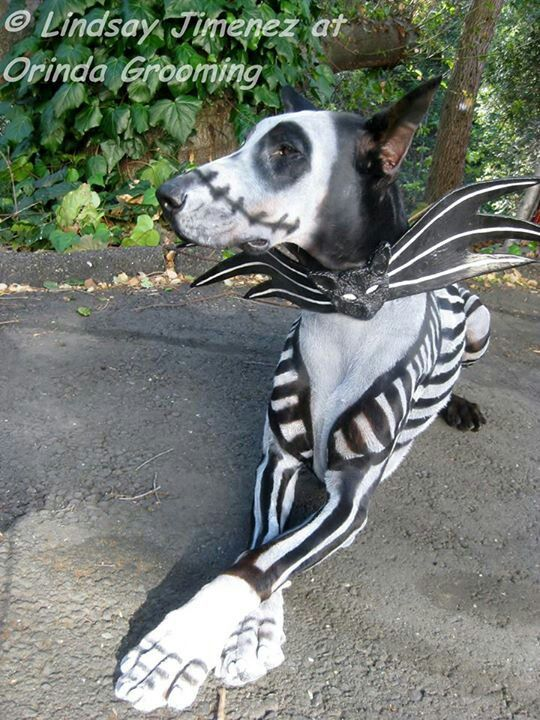Best 25+ Nightmare before christmas dog ideas on Pinterest | Zero ...