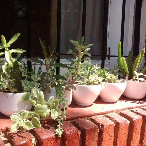 Mini Jardines - Aldea
