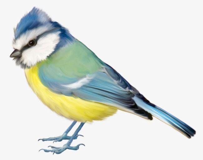 Birds Birds Bird Clipart Birds Natural Png And Vector With Transparent Background For Free Download Bird Clipart Bird Birds