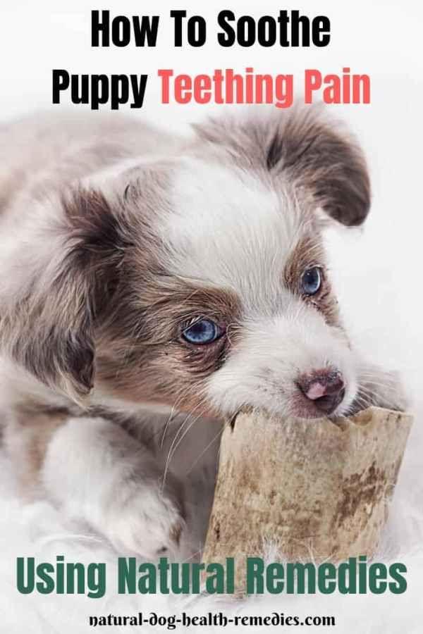 Dog Teething Puppy Teething Antibiotics For Dogs