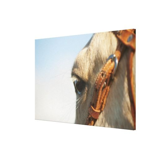 >>>best recommended          Horse bridle canvas prints           Horse bridle canvas prints in each seller & make purchase online for cheap. Choose the best price and best promotion as you thing Secure Checkout you can trust Buy bestDiscount Deals          Horse bridle canvas prints Online...Cleck Hot Deals >>> http://www.zazzle.com/horse_bridle_canvas_prints-192561776170812133?rf=238627982471231924&zbar=1&tc=terrest