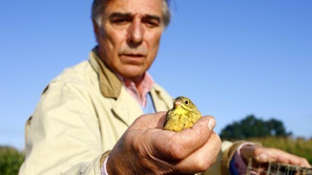 Frankrijk blijft waarschuwingen over de bescherming van wilde vogels in de wind slaan en moet zich daarom verantwoorden voor het Europees Hof van Justitie.
