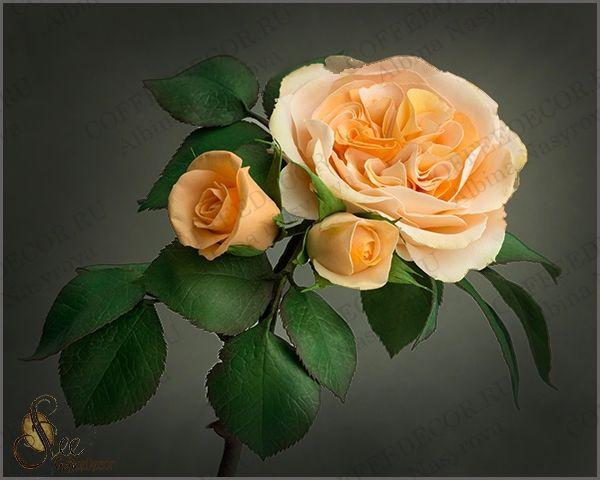 мастер-класс пионовидная роза из зефирного фоамирана