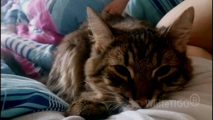 Cute cat waking up her owner