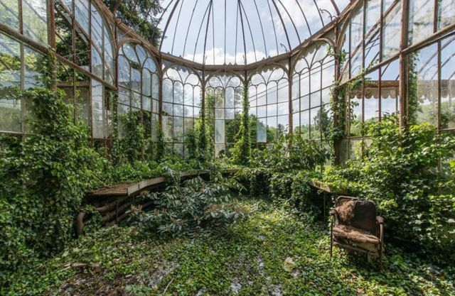 Lush greenery carpets the floor and windows of a conservatory in Belgium.