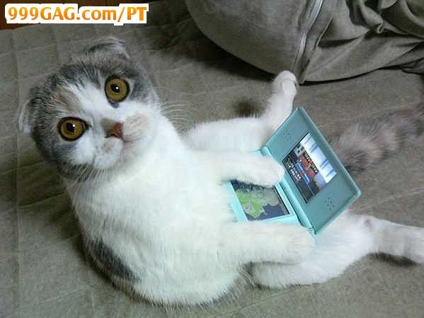 Awwww!: Gamer Cat, Scottish Folding, Videos Games, Funny Cat, Nintendo Ds, Cat Plays, The Games, Funny Stuff, Funny Animal