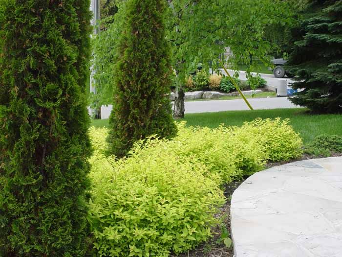 Planting Around House Foundations : Ideas about foundation planting on shrubs evergreen