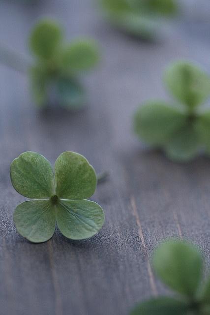 i found my four leaf clover alright!