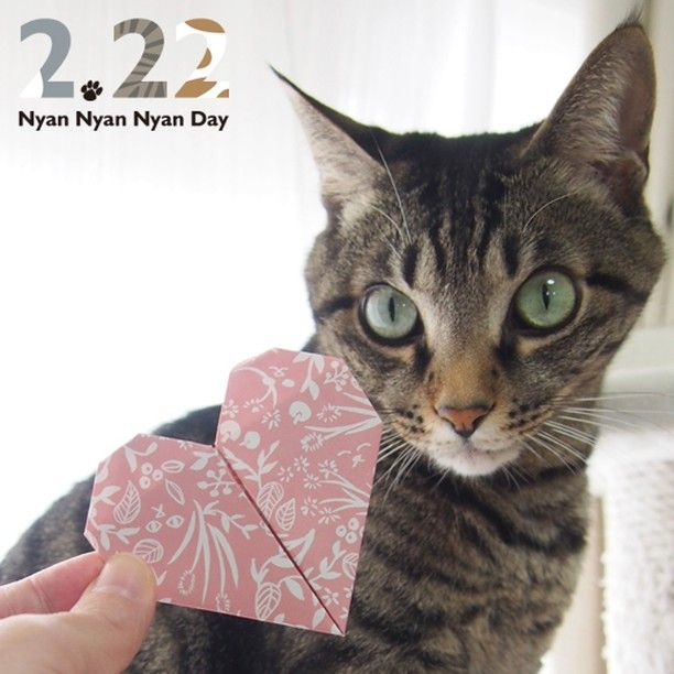 You are my Purrfect Valentine. Be my catnip <3  Catchy Cat Day Event!. . Tag▶️ #catchy222 follow us▶️ @catchy_business.  #cat #neko #catsofinstagram #origami#BeOurValentinePet2016#catvalentine #valentine #valentines #valentinesday #bemyvalentine #happyvalentinesday#happyvalentine