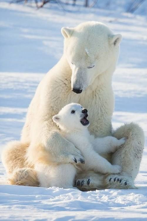 Polar baby with his mother