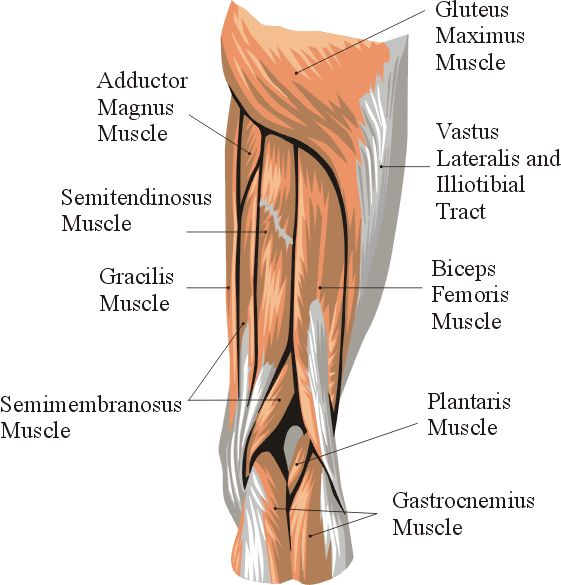 8 best Anatomy of Knee images on Pinterest | Human anatomy, Physical ...