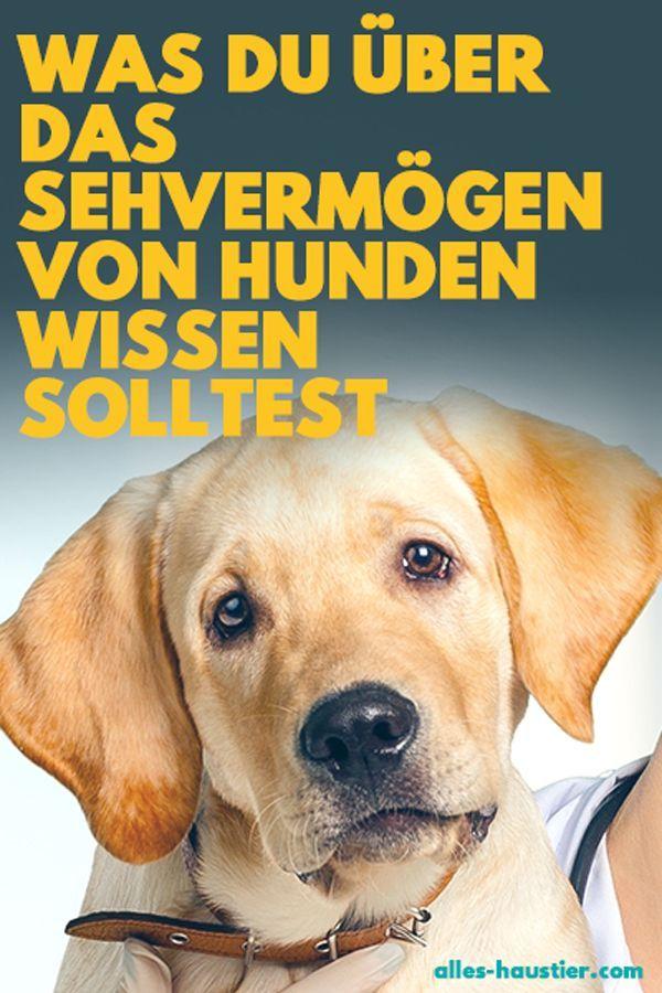 Konnen Hunde Farben Sehen Hunde Hundeverhalten Und Haustiere