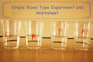 Easy experiment to determine which blood types are compatible. Free experiment worksheet