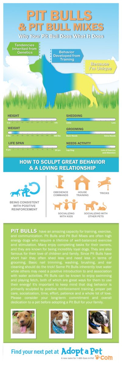 Everything you ever wanted to know about Pit Bulls and Pit Bull mixes. www.adoptapet.com