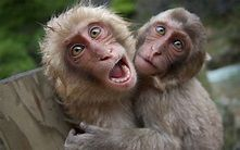 25+ Funniest Pictures Of Monkeys | Picsoi