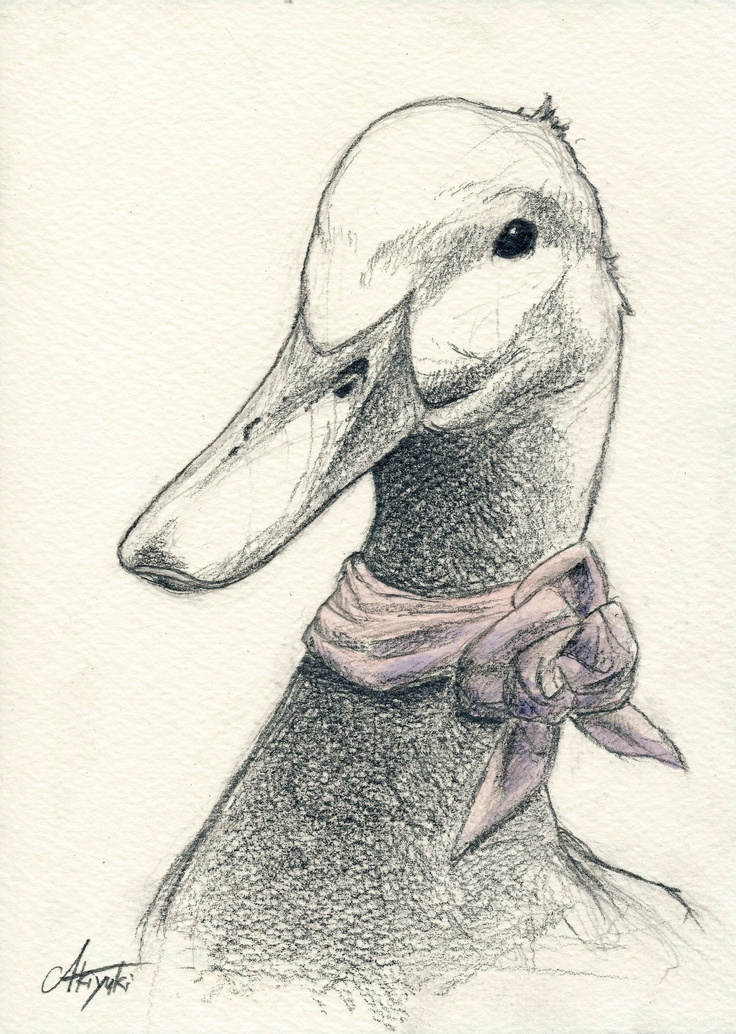Duck #illustration #art #drawing