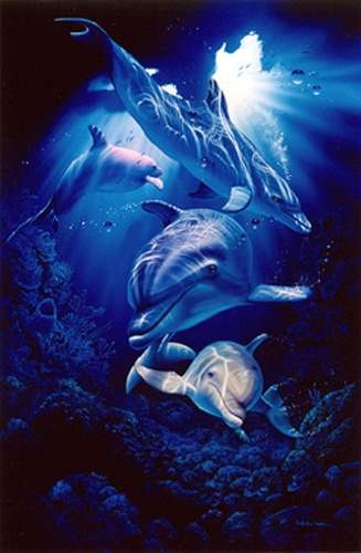 Christian Brothers Coupons >> 17 Best images about Christian Lassen Sea Life Artwork on Pinterest | Dolphins, School folders ...