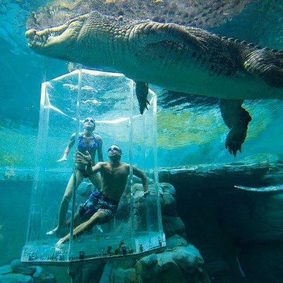 Crocosaurus Cove Aquarium, Australia. Like a shark cage....Not no, but HELL no!!