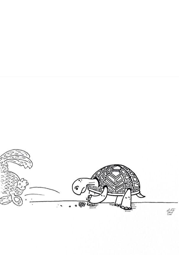 La liebre y la tortuga MEF