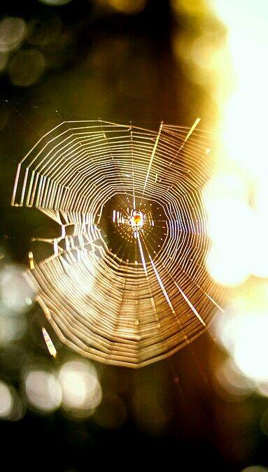 Паутина. Spider's web