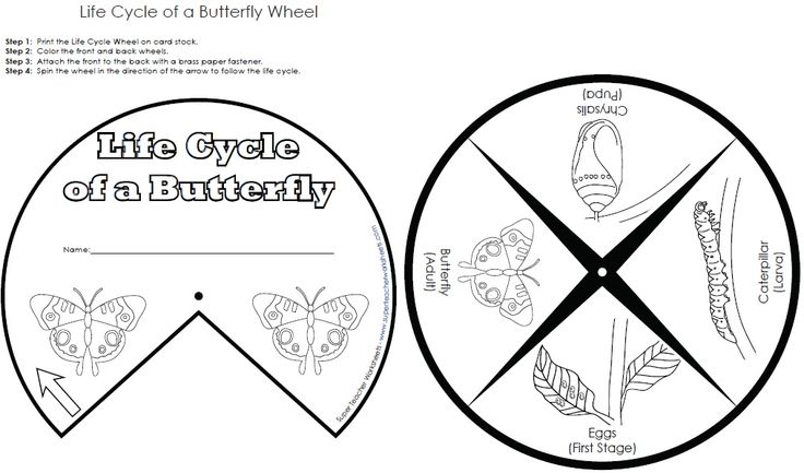 Life cycle of butterfly worksheet - photo#18