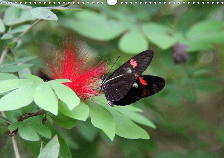 """Tier-Posterbuch """"Schmetterlinge der Tropen"""", Seite 7"""