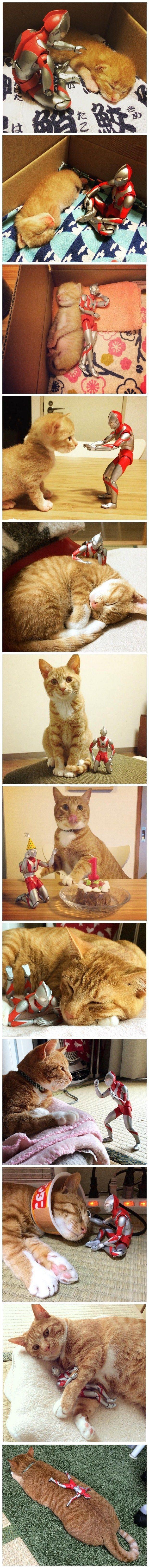 Das Lieblingsspielzeug dieser Katze ist bei ihm, seit er ein Baby war – #Baby #b