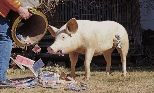 cerdo capitalista codicioso (obra)
