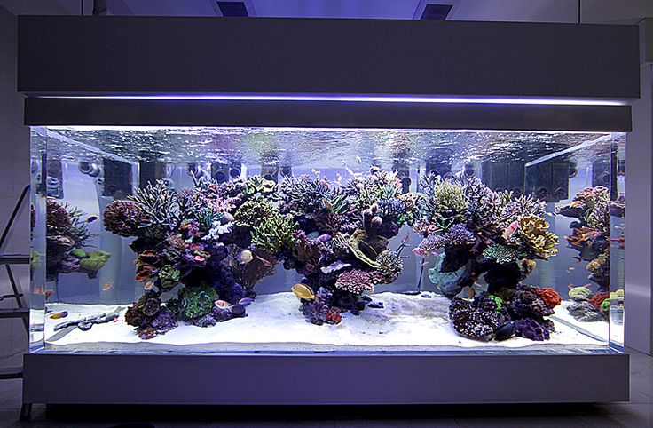 Chingchai's epic DPS tank in Thailand | ReefCentral