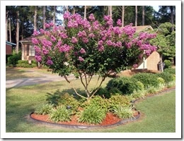 red dirt gardening good info for oklahoma gardeners perfect timing for our flower bed